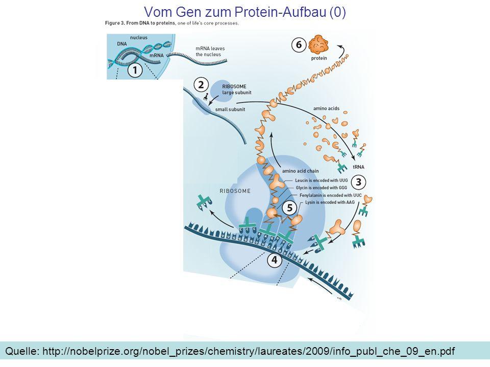 Vom Gen zum Protein-Aufbau (0) Quelle: http://nobelprize.org/nobel_prizes/chemistry/laureates/2009/info_publ_che_09_en.pdf