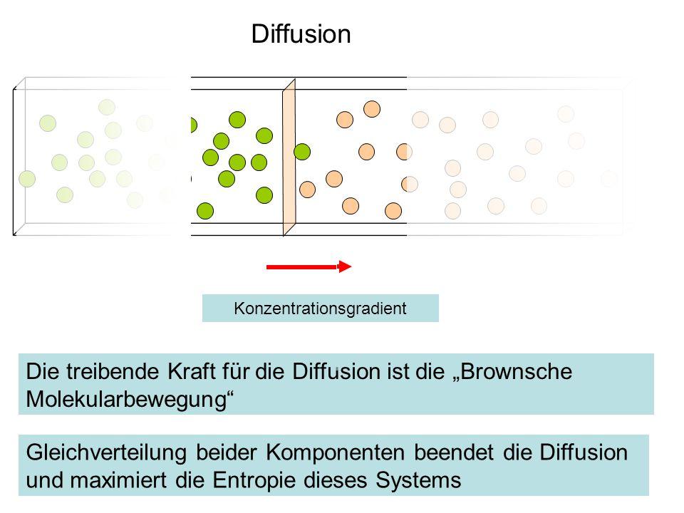 Diffusion Gleichverteilung beider Komponenten beendet die Diffusion und maximiert die Entropie dieses Systems Die treibende Kraft für die Diffusion is