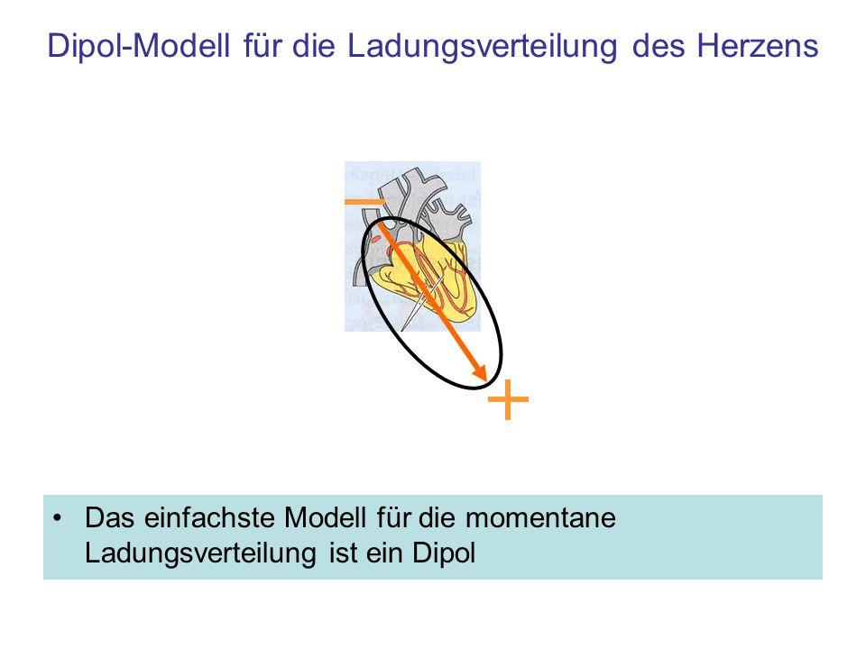 Modell der Ladungsverteilung beim schlagenden Herzen Modell für die variable Ladungsverteilung beim schlagenden Herzen: Rotierender Dipol variabler Länge