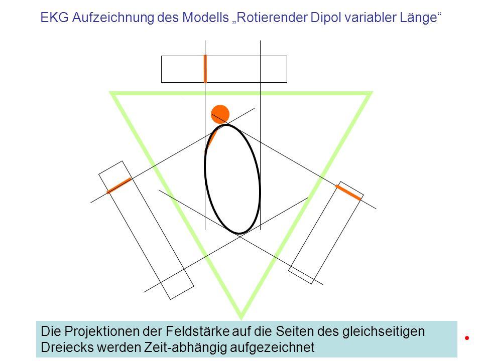 Schema einer realistischen EKG Aufzeichnung Die Ableitungen nach Eindhofenzeigen die Projektion der vom Herzen erzeugten Potentiale auf die Seiten eines gleichseitigen Dreiecks