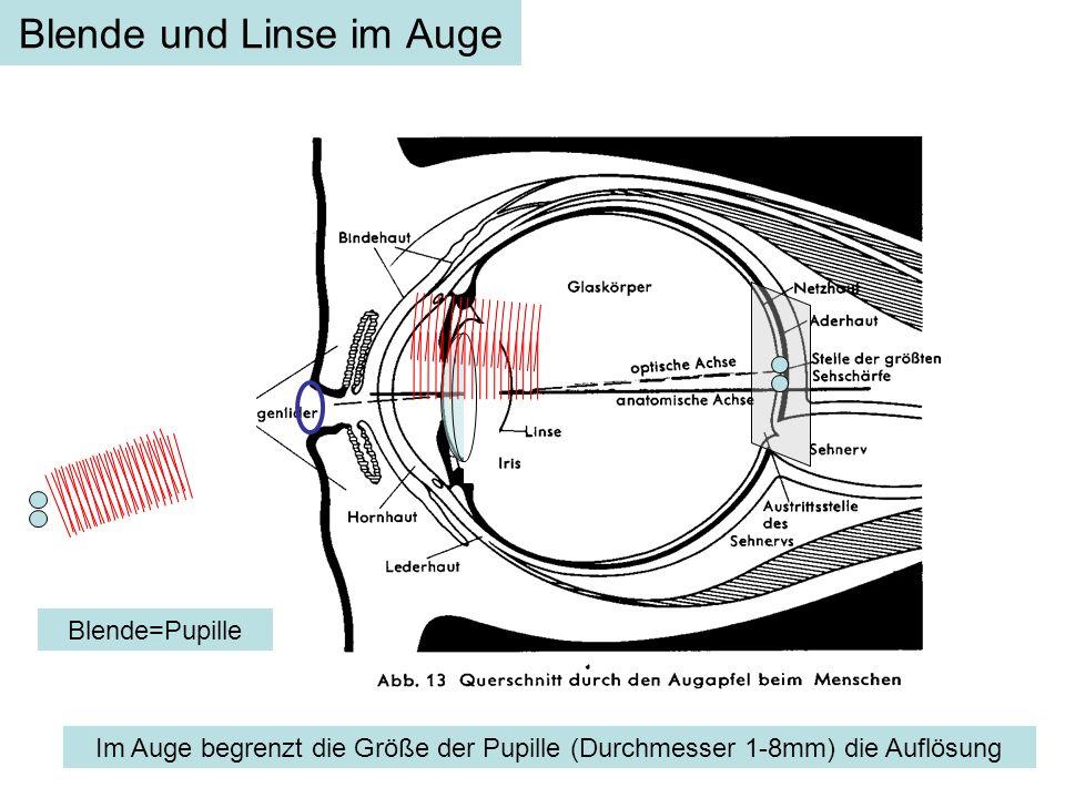 Blende und Linse im Auge Blende=Pupille Im Auge begrenzt die Größe der Pupille (Durchmesser 1-8mm) die Auflösung