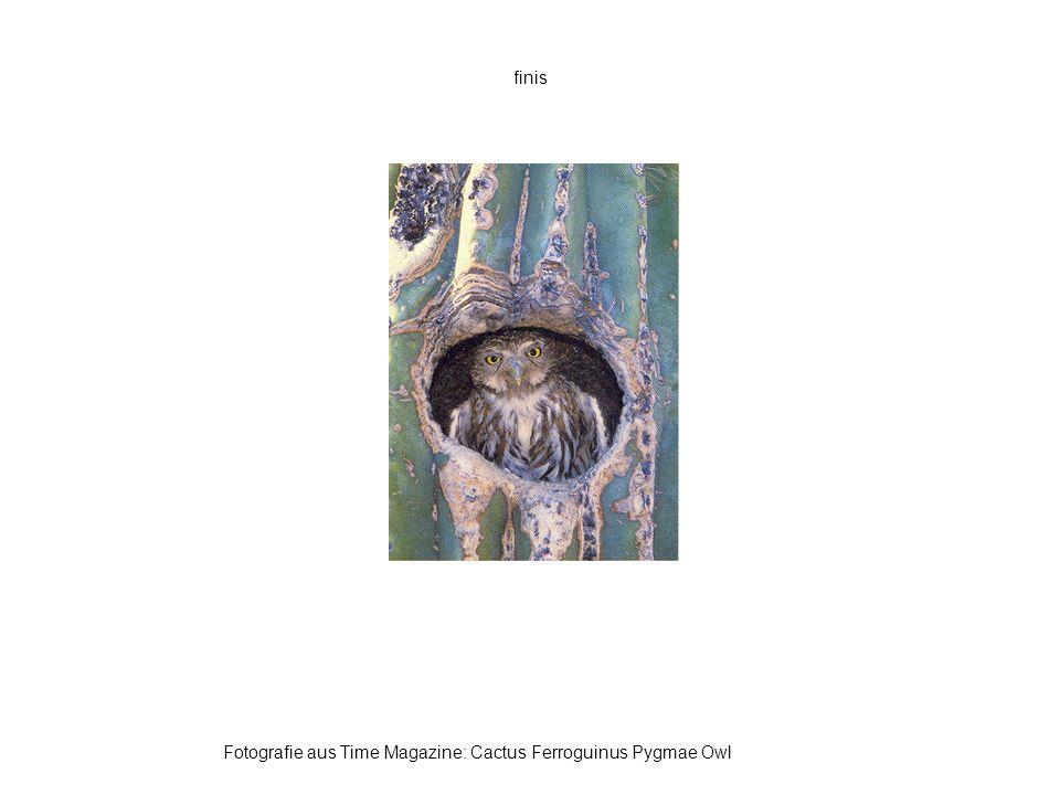 finis Fotografie aus Time Magazine: Cactus Ferroguinus Pygmae Owl