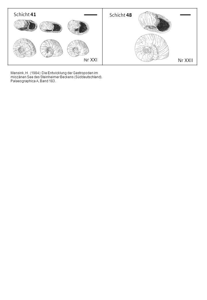 Schicht 41 Nr XXI Schicht 48 Nr XXII Mensink, H. (1984): Die Entwicklung der Gastropoden im miozänen See des Steinheimer Beckens (Süddeutschland). Pal