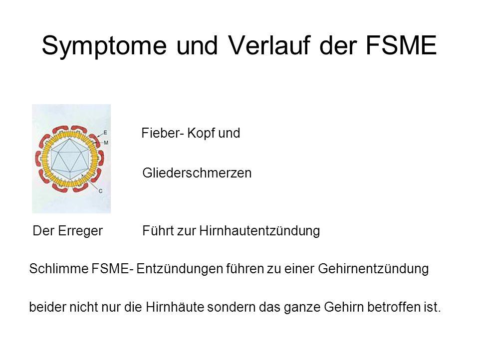 Symptome und Verlauf der FSME Fieber- Kopf und Gliederschmerzen Der Erreger Führt zur Hirnhautentzündung Schlimme FSME- Entzündungen führen zu einer G