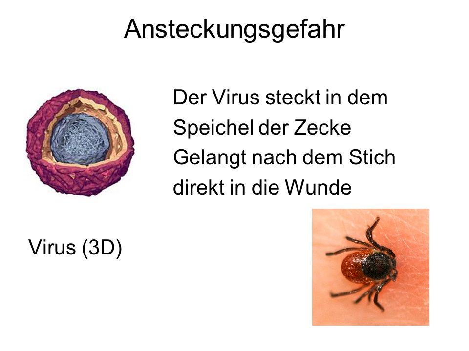 Ansteckungsgefahr Der Virus steckt in dem Speichel der Zecke Gelangt nach dem Stich direkt in die Wunde Virus (3D)