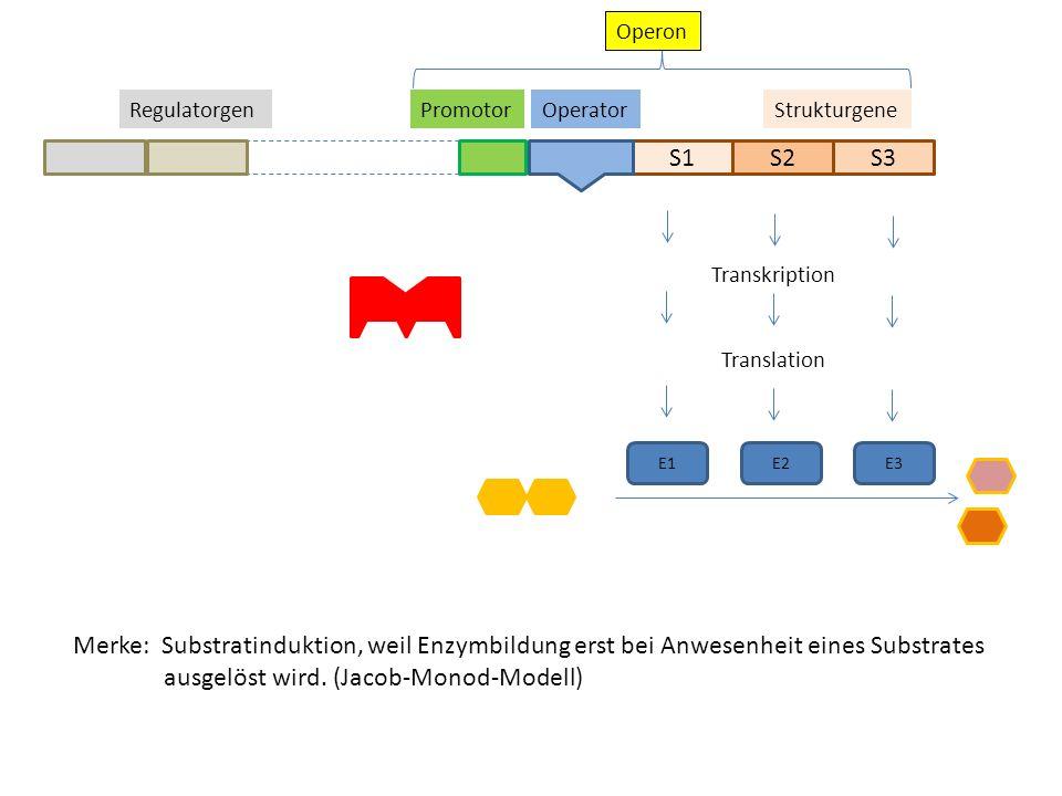 S1S2S3 StrukturgeneOperatorPromotorRegulatorgen Operon Transkription Translation E1E2 E3 Merke: Substratinduktion, weil Enzymbildung erst bei Anwesenh