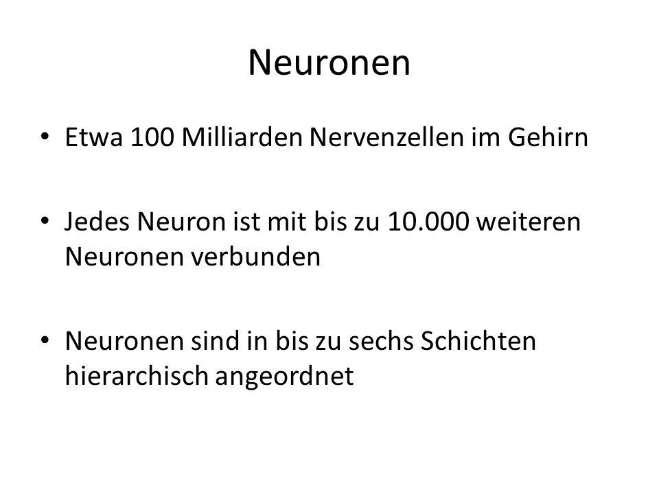 Neuronen Etwa 100 Milliarden Nervenzellen im Gehirn Jedes Neuron ist mit bis zu 10.000 weiteren Neuronen verbunden Neuronen sind in bis zu sechs Schic