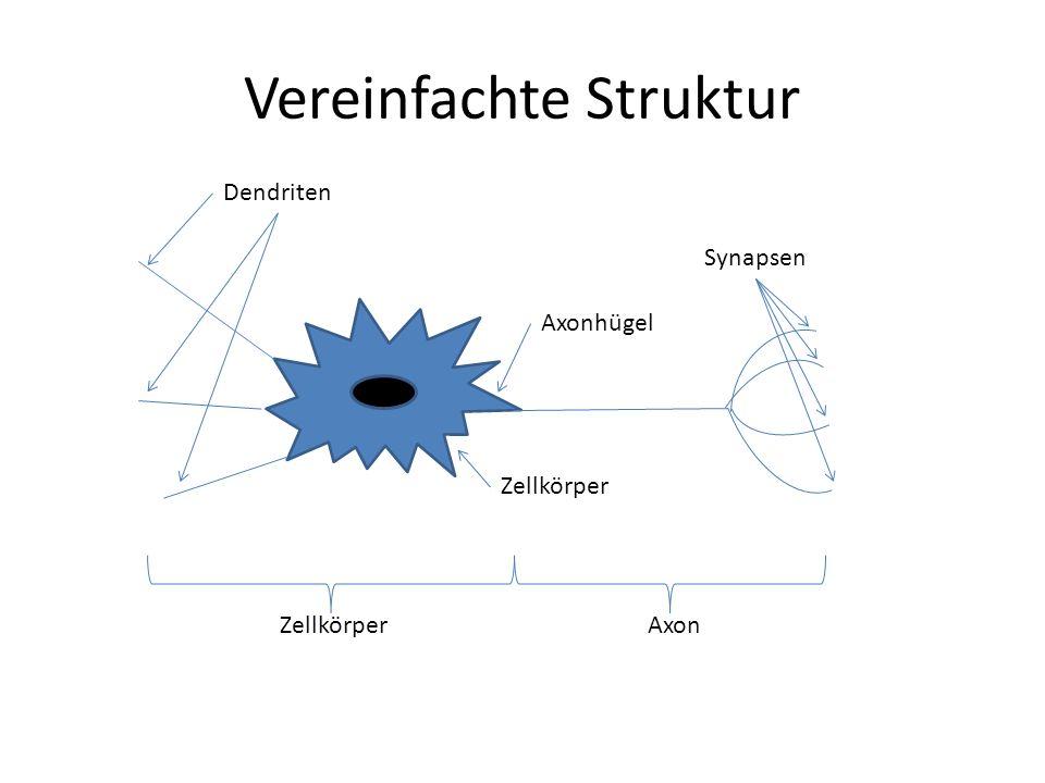 Vereinfachte Struktur Axon Zellkörper Dendriten Synapsen Axonhügel Zellkörper