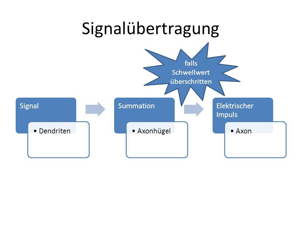 Signalübertragung Signal Dendriten Summation Axonhügel Elektrischer Impuls Axon falls Schwellwert überschritten