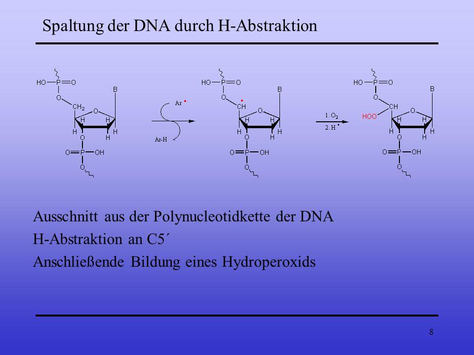 8 Spaltung der DNA durch H-Abstraktion Ausschnitt aus der Polynucleotidkette der DNA H-Abstraktion an C5´ Anschließende Bildung eines Hydroperoxids