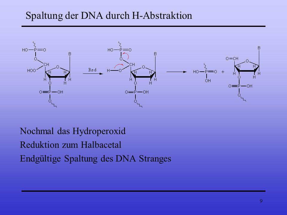 9 Spaltung der DNA durch H-Abstraktion Nochmal das Hydroperoxid Reduktion zum Halbacetal Endgültige Spaltung des DNA Stranges