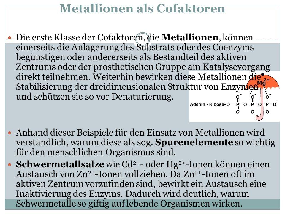 Metallionen als Cofaktoren Die erste Klasse der Cofaktoren, die Metallionen, können einerseits die Anlagerung des Substrats oder des Coenzyms begünsti