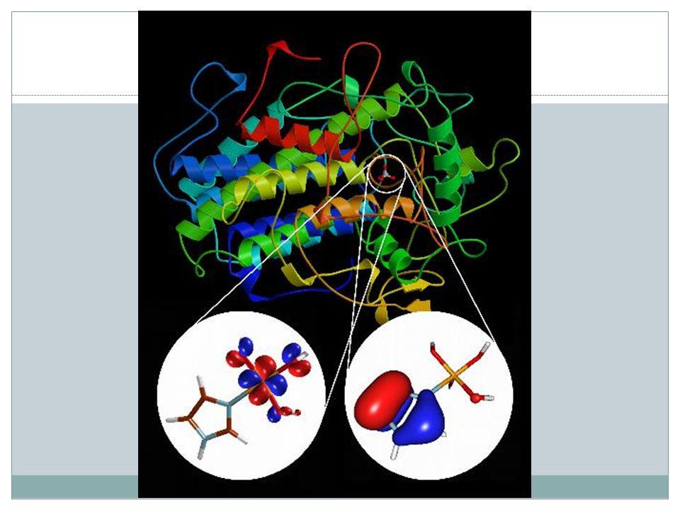Coenzyme als Cofaktoren Die Coenzyme bestehen aus kleinen organischen Molekülen.