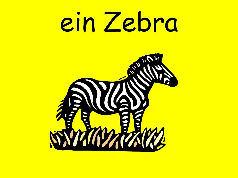 ein Zebra