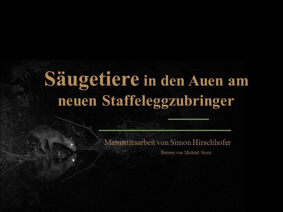 Säugetiere in den Auen am neuen Staffeleggzubringer Maturitätsarbeit von Simon Hirschhofer Betreut von Michael Storz