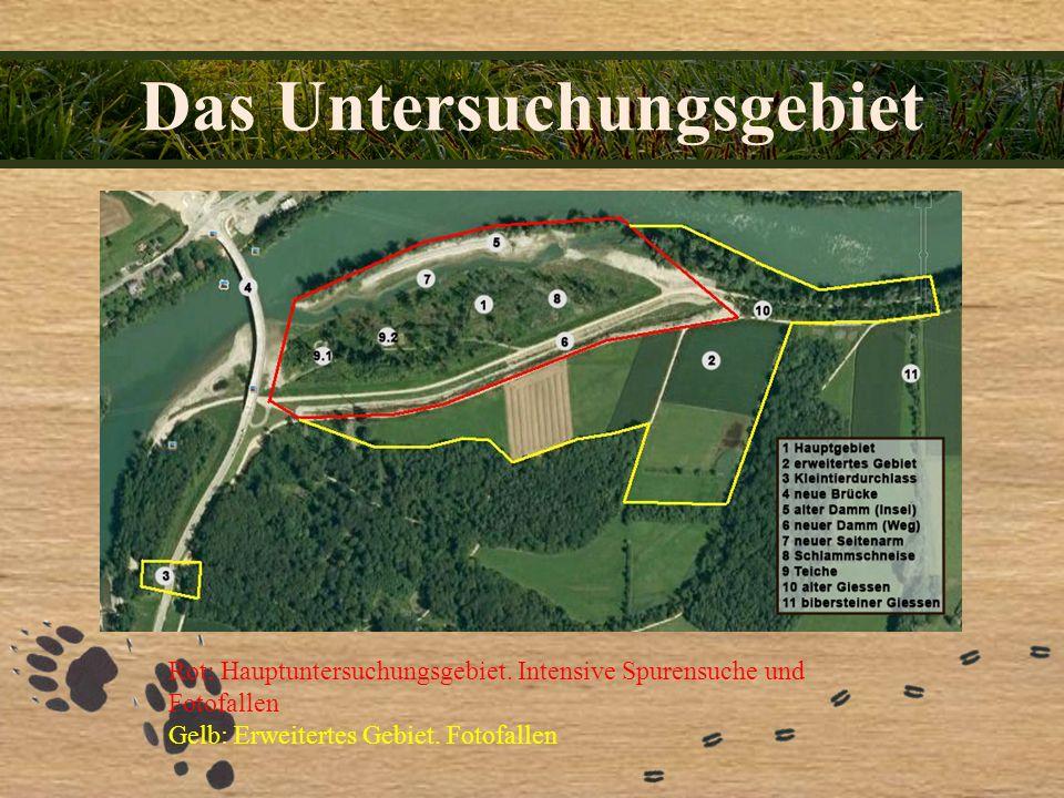 Das Untersuchungsgebiet Rot: Hauptuntersuchungsgebiet. Intensive Spurensuche und Fotofallen Gelb: Erweitertes Gebiet. Fotofallen