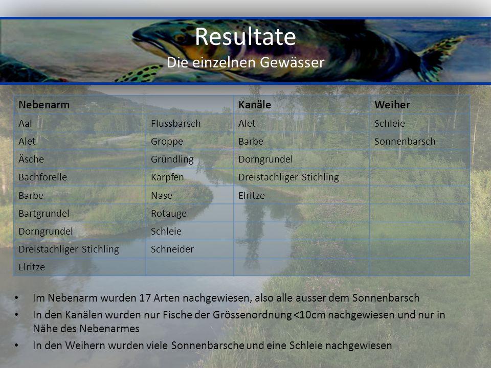 Resultate Die einzelnen Gewässer Im Nebenarm wurden 17 Arten nachgewiesen, also alle ausser dem Sonnenbarsch In den Kanälen wurden nur Fische der Grös