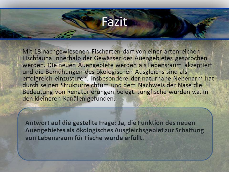Fazit Mit 18 nachgewiesenen Fischarten darf von einer artenreichen Fischfauna innerhalb der Gewässer des Auengebietes gesprochen werden.