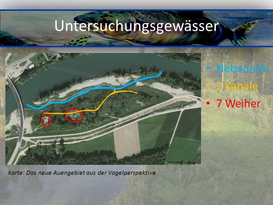 Untersuchungsgewässer Nebenarm 2 Kanäle 7 Weiher Karte: Das neue Auengebiet aus der Vogelperspektive