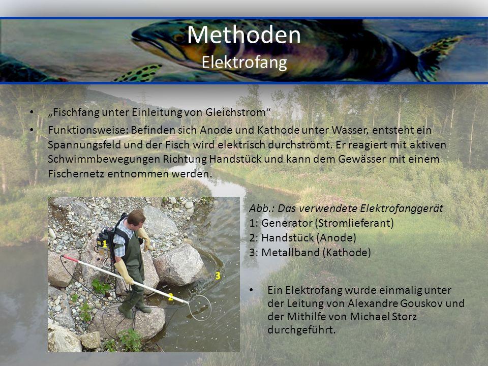 Methoden Elektrofang Fischfang unter Einleitung von Gleichstrom Funktionsweise: Befinden sich Anode und Kathode unter Wasser, entsteht ein Spannungsfeld und der Fisch wird elektrisch durchströmt.