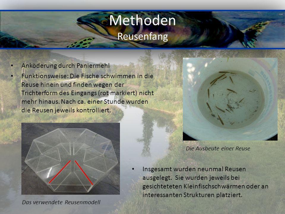 Methoden Reusenfang Anköderung durch Paniermehl Funktionsweise: Die Fische schwimmen in die Reuse hinein und finden wegen der Trichterform des Eingang