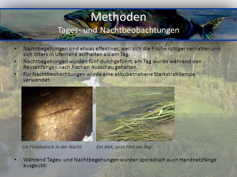 Methoden Tages- und Nachtbeobachtungen Nachtbegehungen sind etwas effektiver, weil sich die Fische ruhiger verhalten und sich öfters in Ufernähe aufhalten als am Tag.
