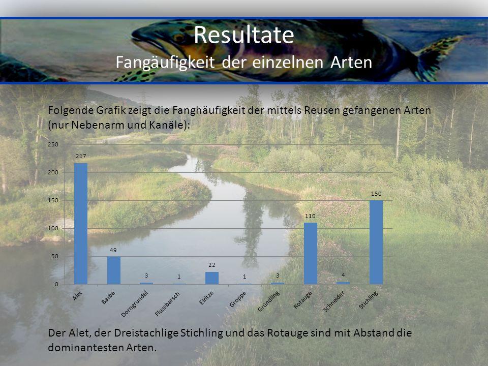 Resultate Fangäufigkeit der einzelnen Arten Folgende Grafik zeigt die Fanghäufigkeit der mittels Reusen gefangenen Arten (nur Nebenarm und Kanäle): De