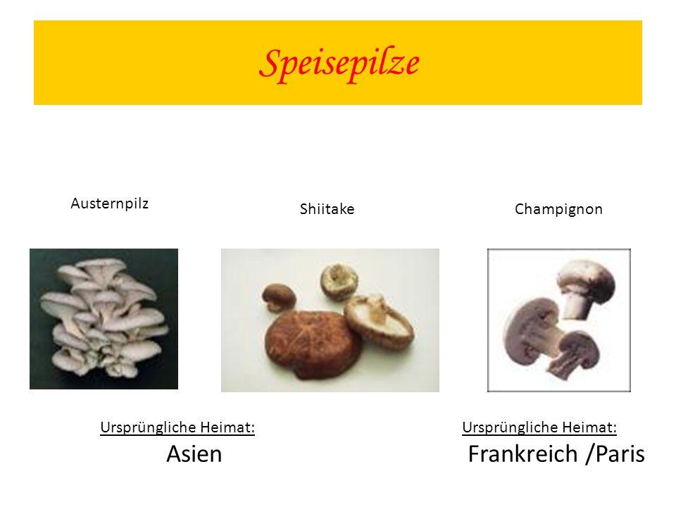 Speisepilze Austernpilz Shiitake Ursprüngliche Heimat: Asien Champignon Ursprüngliche Heimat: Frankreich /Paris