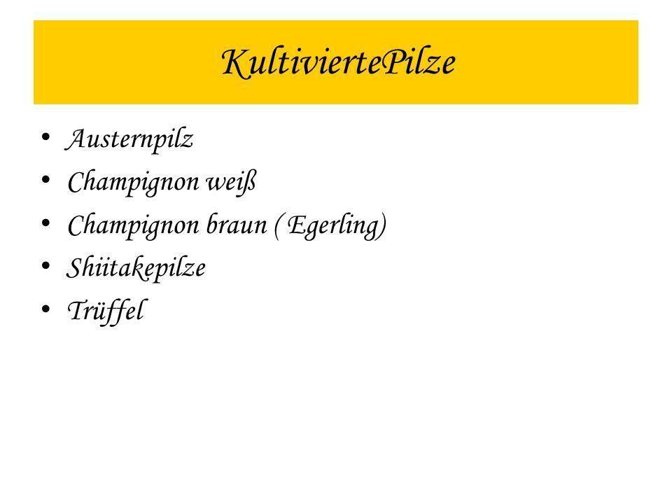 Austernpilz Champignon weiß Champignon braun ( Egerling) Shiitakepilze Trüffel KultiviertePilze