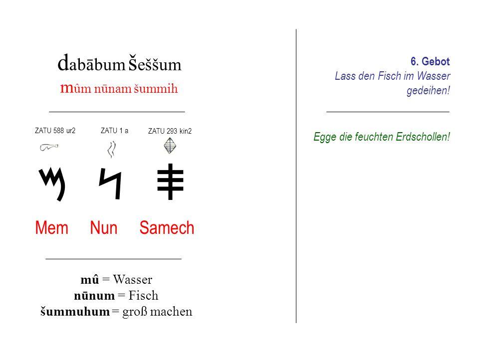 d abābum s ebûm i nīśma pīś şād Ajin Pe Tsade īnum = Auge pûm = Mund şâdum = umherjagen 7.