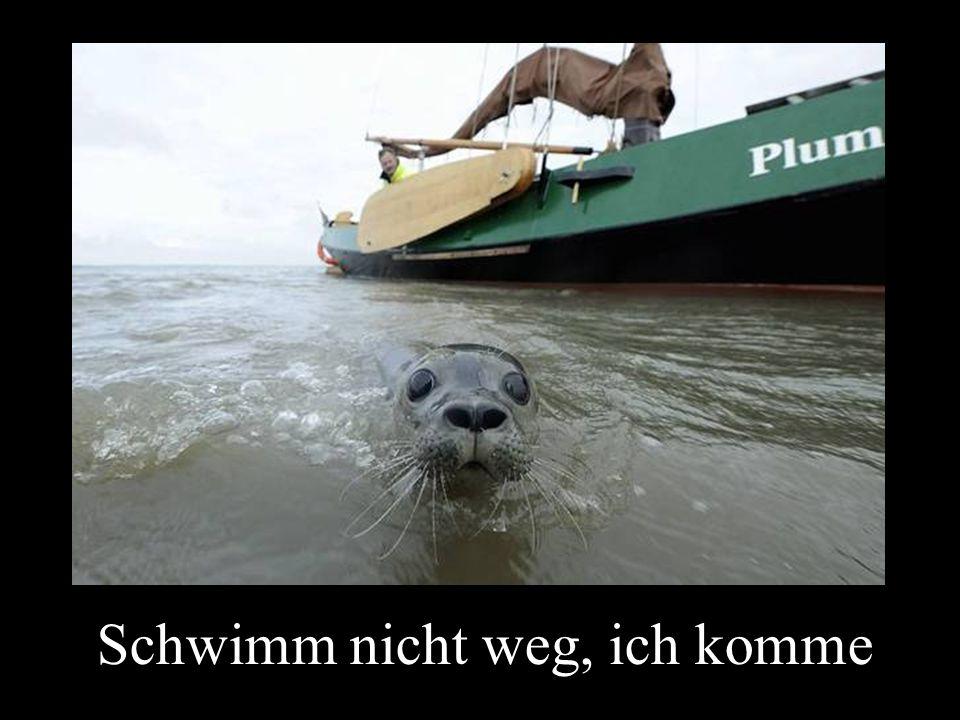 Schwimm nicht weg, ich komme