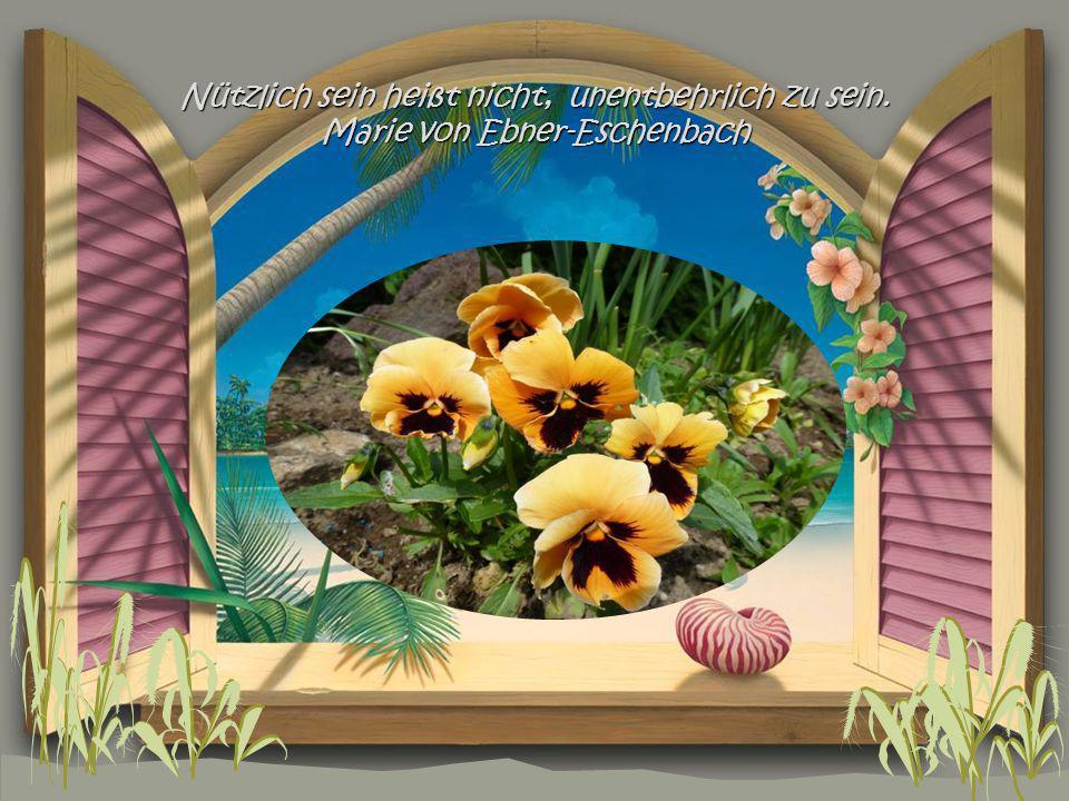 Kein Geschenk mag eine Menschenseele mehr zu erfreuen als Verständnis. Elisabeth Hable