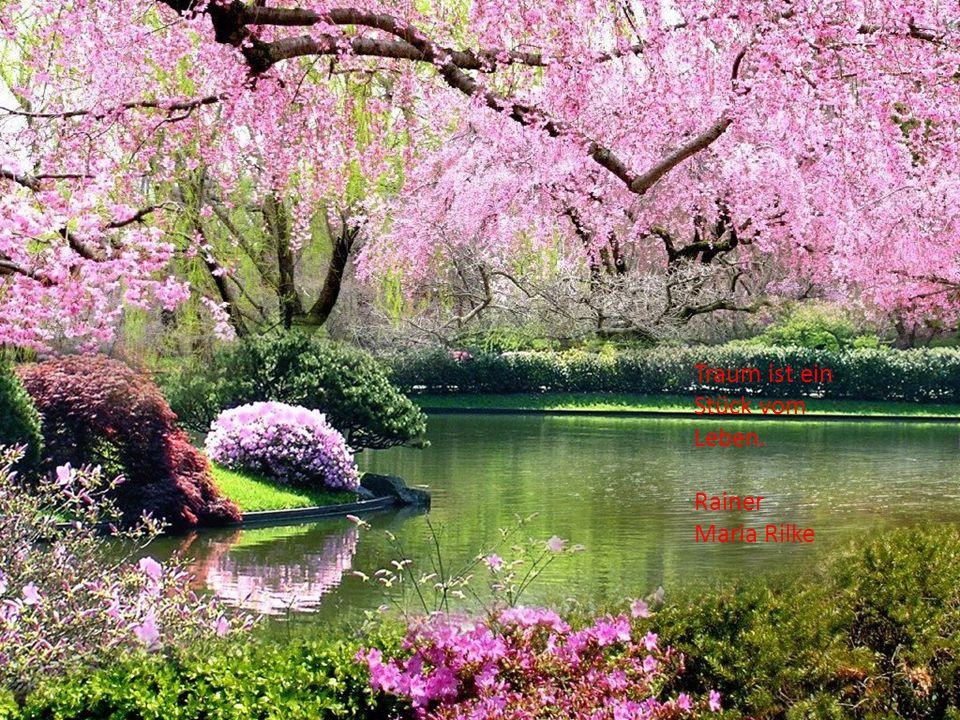 Ein Freund ist jemand, der deinen kaputten Zaun übersieht, aber die Blumen bewundert. Wilhelm Raabe