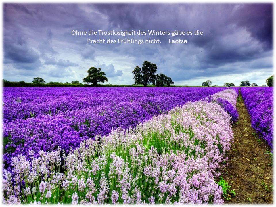 Ohne die Trostlosigkeit des Winters gäbe es die Pracht des Frühlings nicht. Laotse
