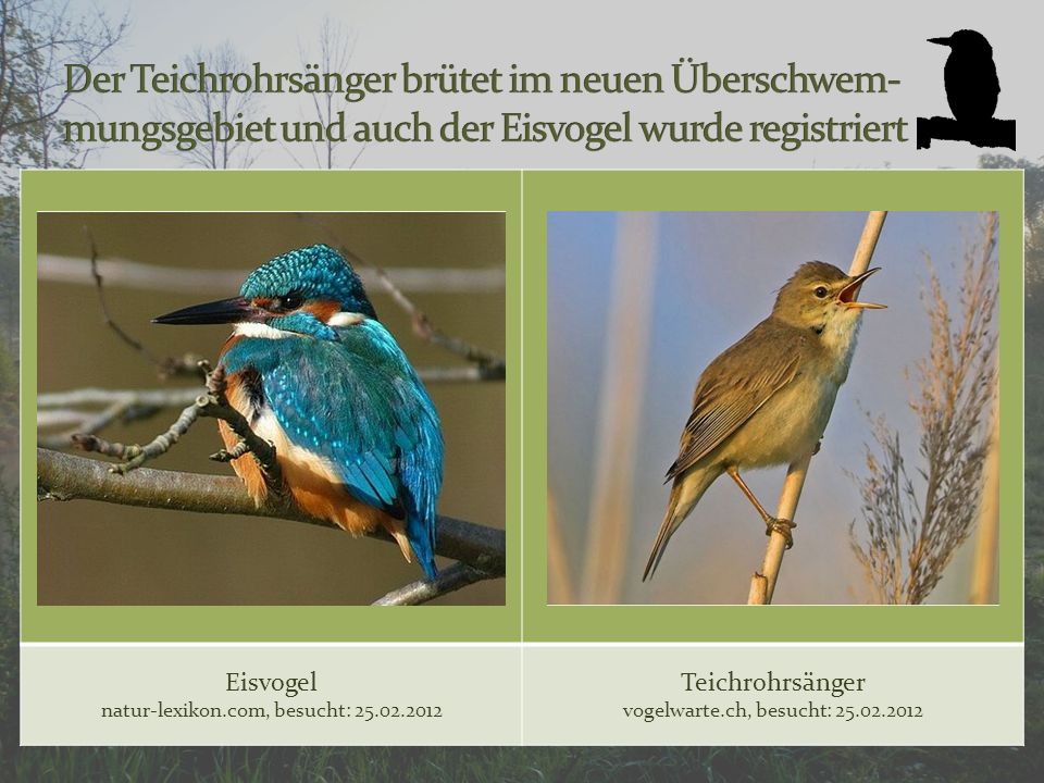 Eisvogel natur-lexikon.com, besucht: 25.02.2012 Teichrohrsänger vogelwarte.ch, besucht: 25.02.2012