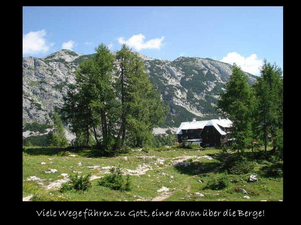 Bücke dich runter und bestaune diese wunderbare Alpenblume Almrausch