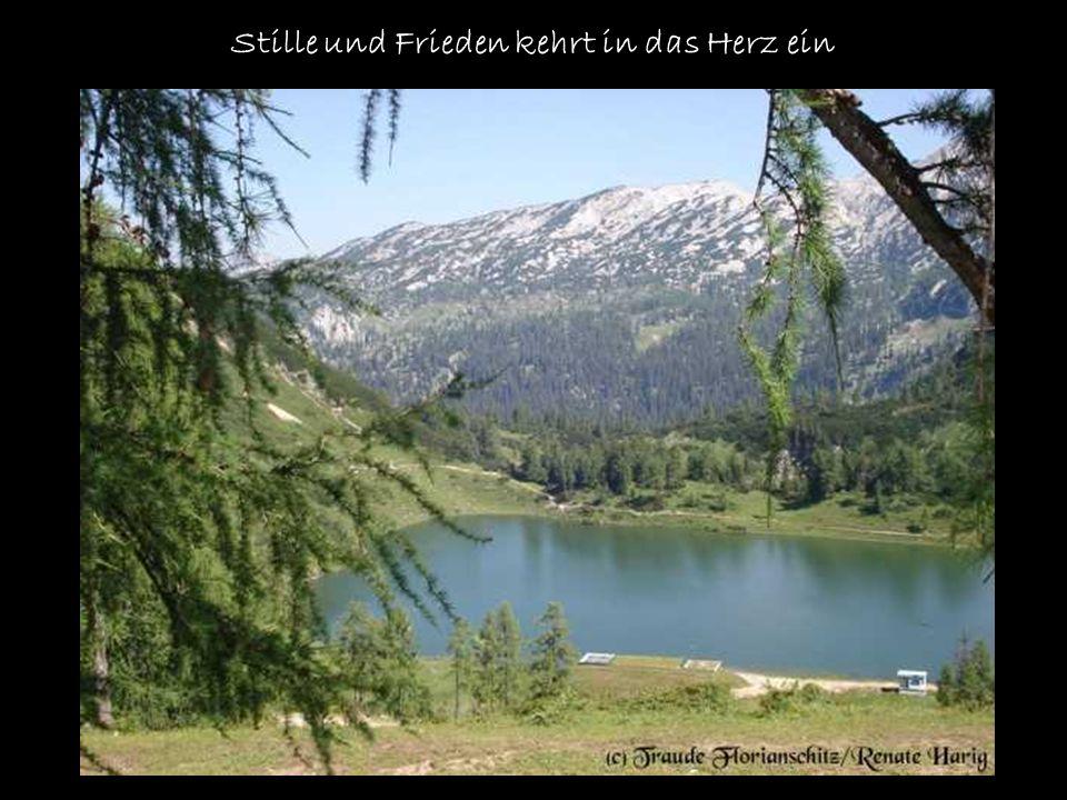 Die Blumen der Alpen haben einen ganz besonderen Reiz Sie blühen bescheiden und strahlen doch eine geheimnisvolle Schönheit aus.