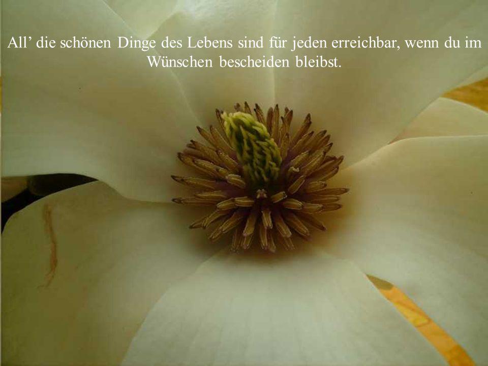 Wenn Blüten singen könnten, es wäre ein unbeschreibliches Konzert!