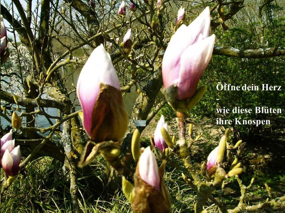 Öffne dein Herz - wie diese Blüten ihre Knospen