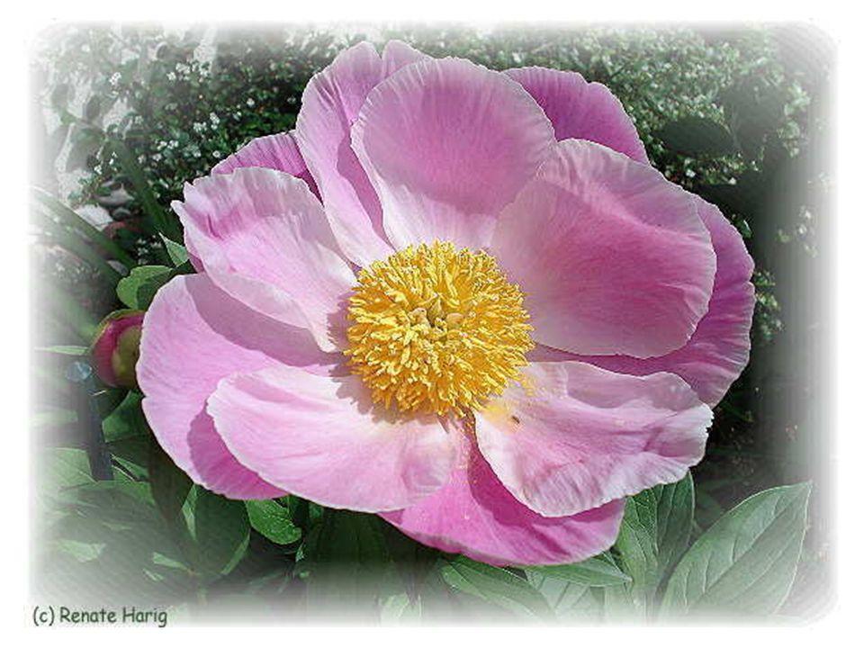Glück ist, das Rauschen der Blätter eines Baumes zu hören und den Blütenduft einzuatmen.