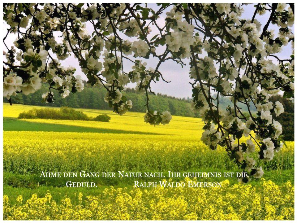 Man sollte Anteil nehmen an der Freude, der Schönheit und der Farbigkeit des Lebens. Oscar Wilde