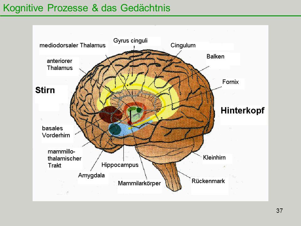 37 Kognitive Prozesse & das Gedächtnis