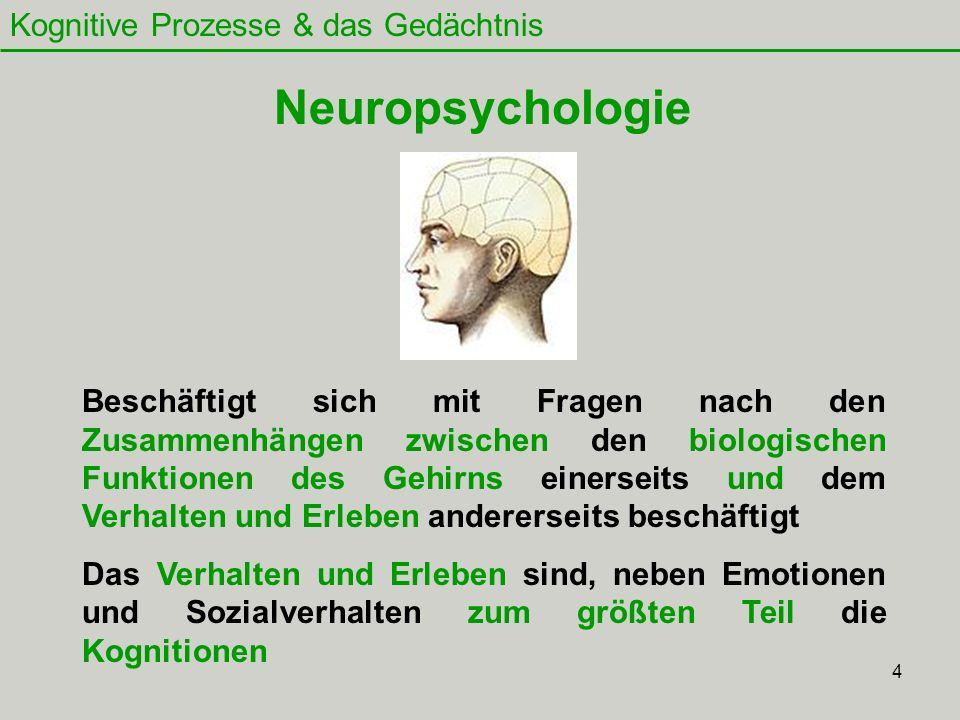 4 Kognitive Prozesse & das Gedächtnis Neuropsychologie Beschäftigt sich mit Fragen nach den Zusammenhängen zwischen den biologischen Funktionen des Ge