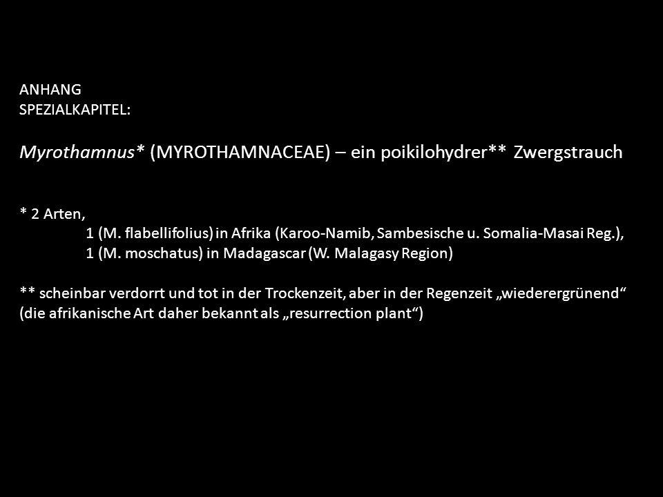 ANHANG SPEZIALKAPITEL: Myrothamnus* (MYROTHAMNACEAE) – ein poikilohydrer** Zwergstrauch * 2 Arten, 1 (M. flabellifolius) in Afrika (Karoo-Namib, Sambe
