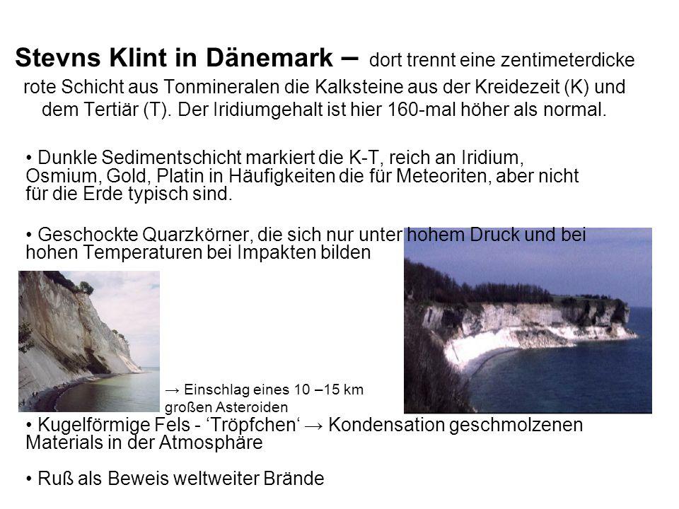 Stevns Klint in Dänemark – dort trennt eine zentimeterdicke rote Schicht aus Tonmineralen die Kalksteine aus der Kreidezeit (K) und dem Tertiär (T). D