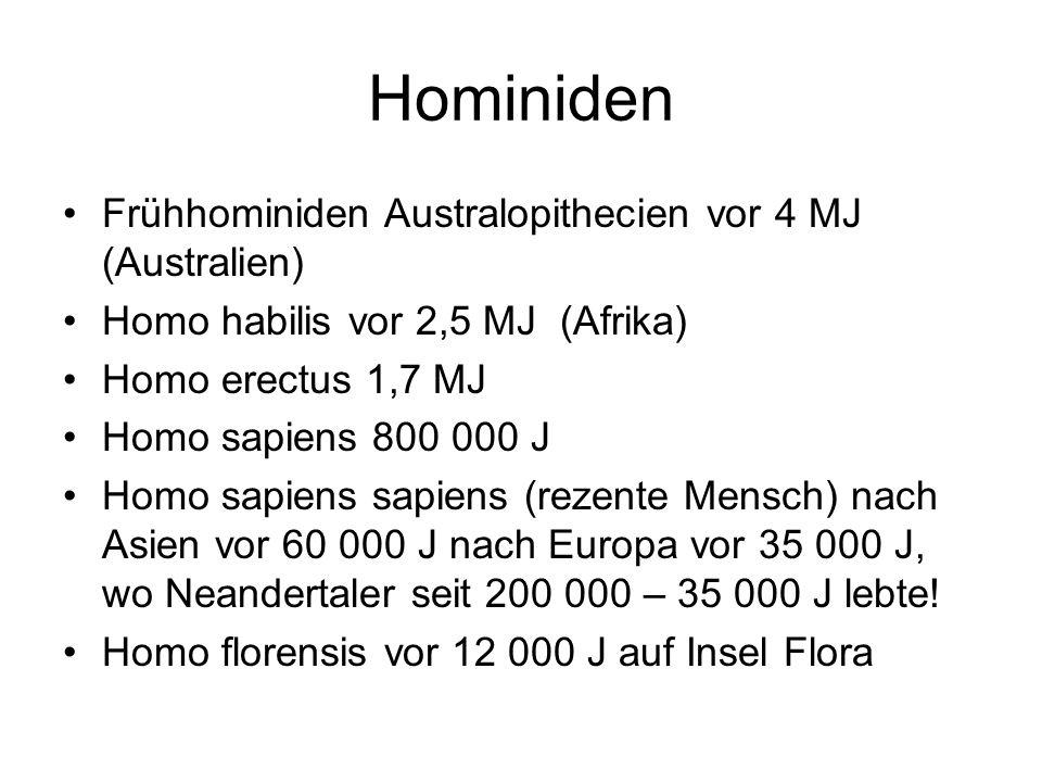 Hominiden Frühhominiden Australopithecien vor 4 MJ (Australien) Homo habilis vor 2,5 MJ (Afrika) Homo erectus 1,7 MJ Homo sapiens 800 000 J Homo sapie