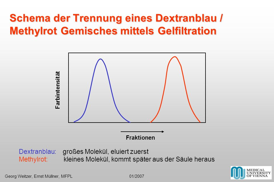 Schema der Trennung eines Dextranblau / Methylrot Gemisches mittels Gelfiltration Fraktionen Farbintensität Dextranblau: großes Molekül, eluiert zuers