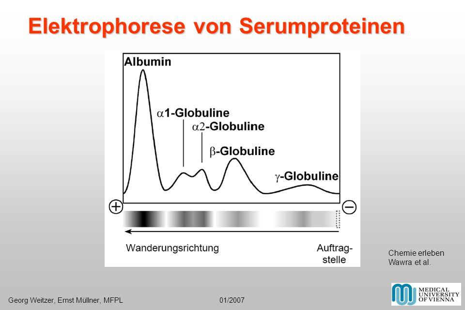 Elektrophorese von Serumproteinen Chemie erleben Wawra et al. Georg Weitzer, Ernst Müllner, MFPL 01/2007