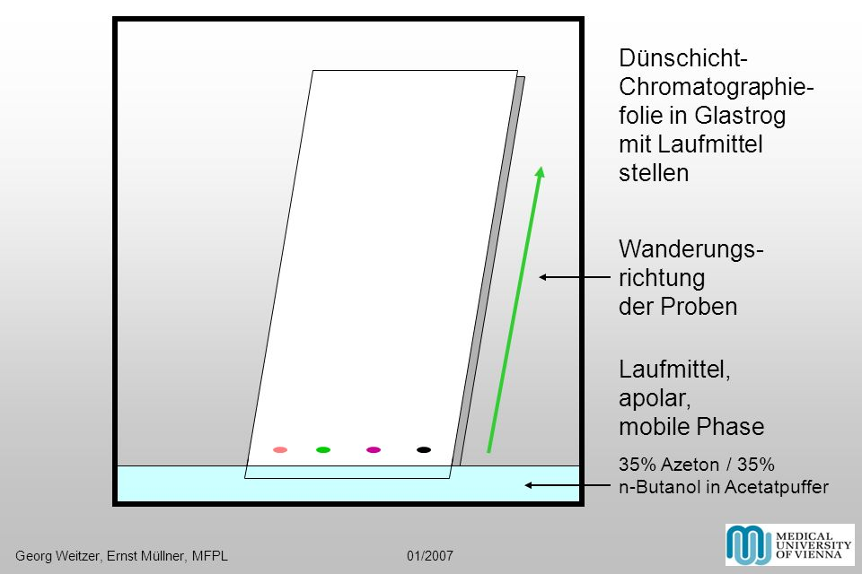 Laufmittel, apolar, mobile Phase 35% Azeton / 35% n-Butanol in Acetatpuffer Dünschicht- Chromatographie- folie in Glastrog mit Laufmittel stellen Wand