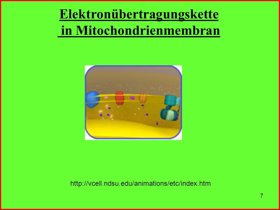 7 http://vcell.ndsu.edu/animations/etc/index.htm Elektronübertragungskette in Mitochondrienmembran